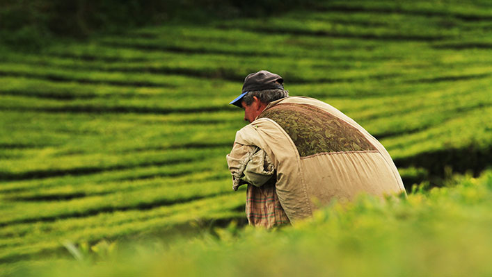 A man carrying a large sack in a green field